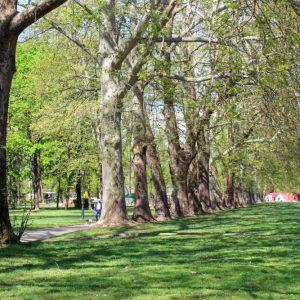 Parku i qytetit